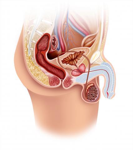 Balanitis: causas y tratamiento de la balanitis – Bupa